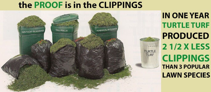 low-maintenance-grass-seed-turtle-turf