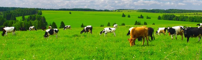 pasture-grass-seed-pasture-seed-agronotec